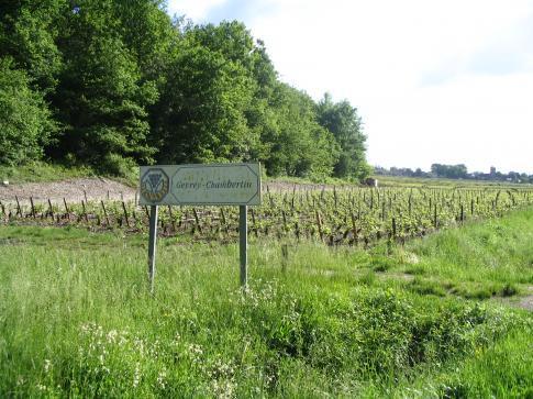 BFCT Le vignoble à l'entrée de Gevrey