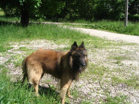 BFCT Le chien de Nans sous Sainte Anne