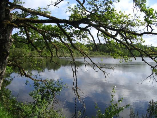 BCT 2007Un étang de Sologne
